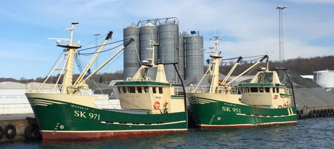 Tonsvis af muslinger skrabes op af havbunden i Aabenraa Fjord lige nu…
