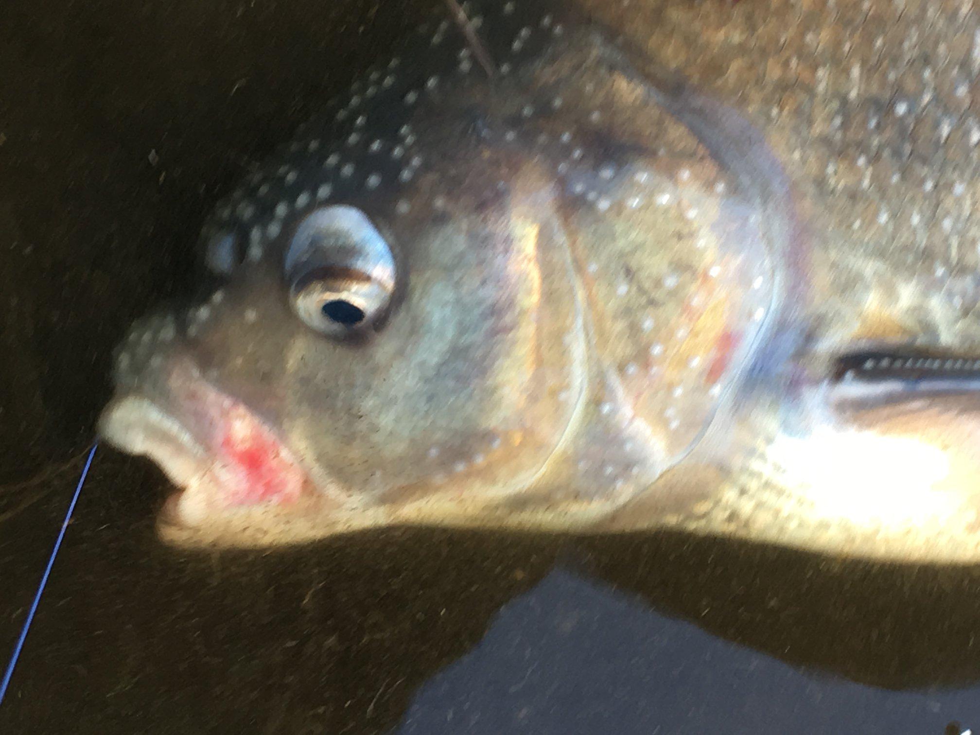 Ministeropfordring: Tag ud og fisk og husk fisketegnet