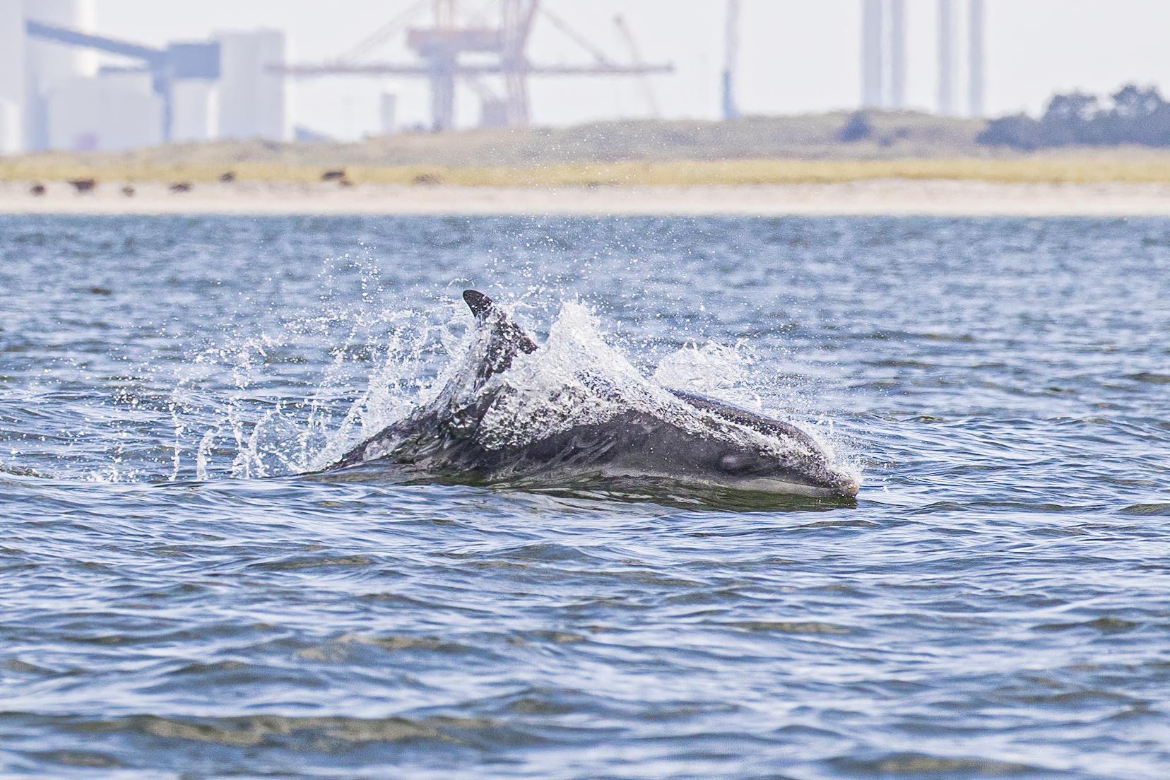 Fiskeri og Søfartsmuseet – Hjælp os med at identificere Flipper